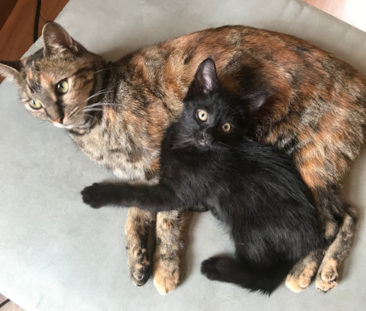 ATHENA & CONWAY KITTY